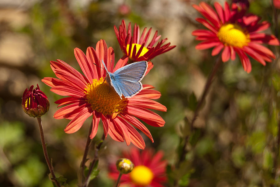 Flower Photograph - Flower And Butterfly by Mariana Atanasova