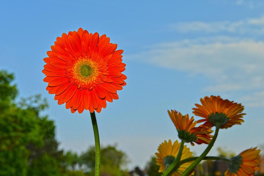 Flower and The Sky by Dragan Kudjerski