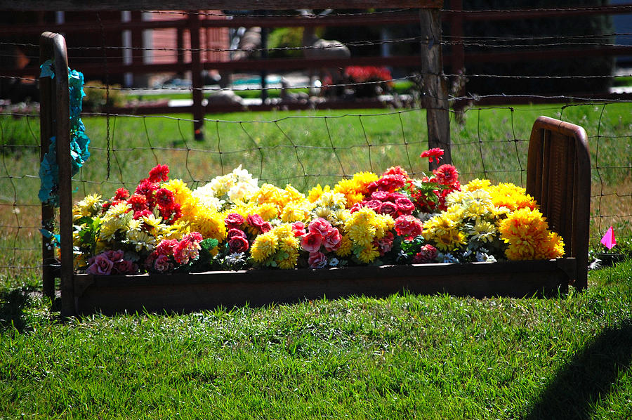 Flower Bed Photograph by Holly Blunkall