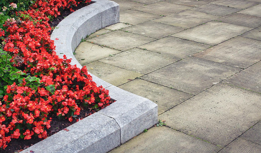 Background Photograph - Flower Bed by Tom Gowanlock