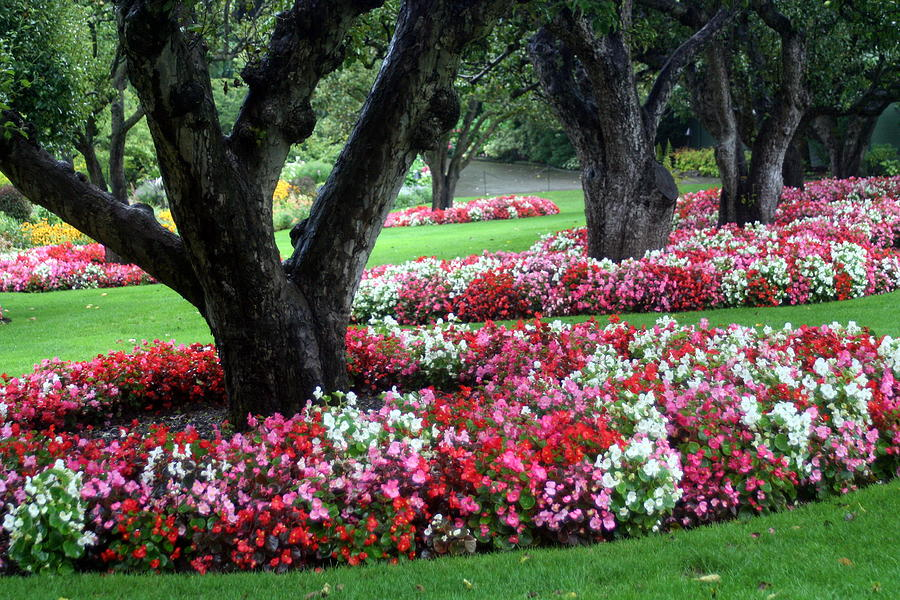 Flower Beds Photograph By Laurel Gillespie