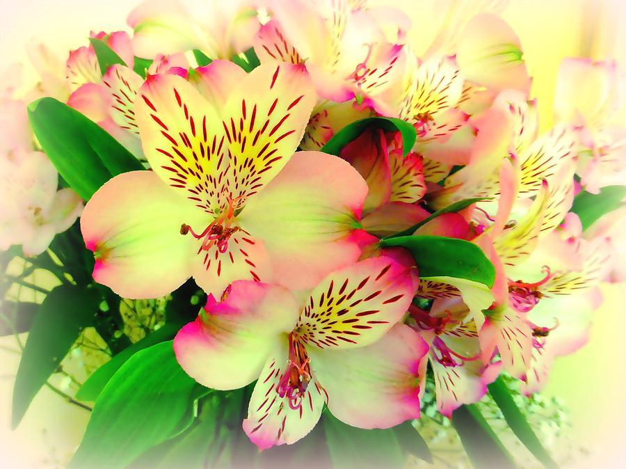 Flower Bouquet In Pink And Yellow Photograph by Bishopston Fine Art