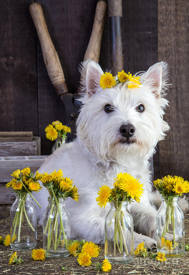 Dog Photograph - Flower Child by Edward Fielding