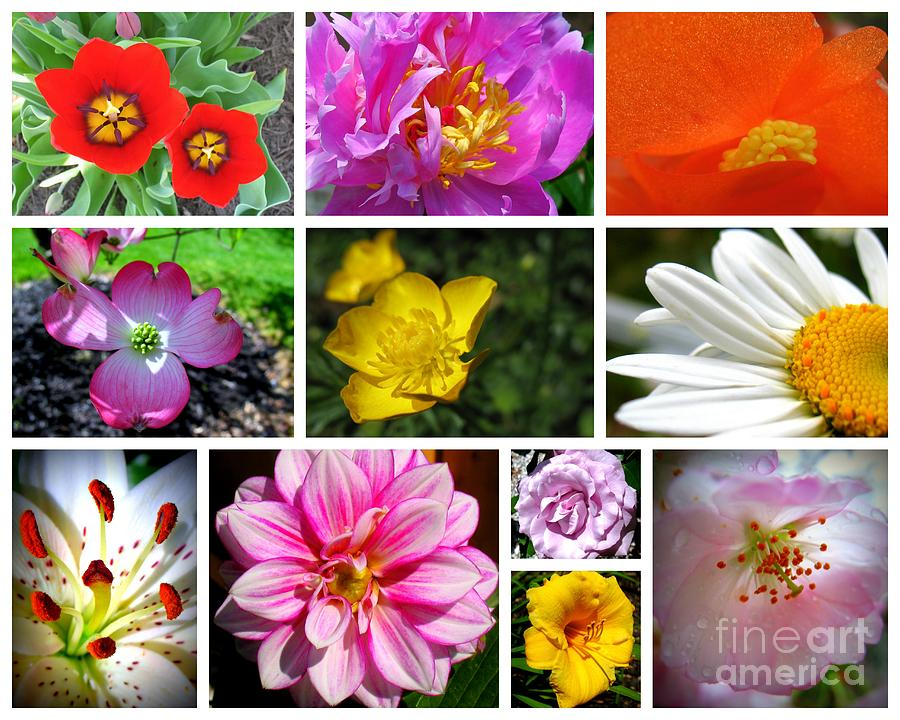 Photo Collage Photograph - Flower Collage by Patti Whitten