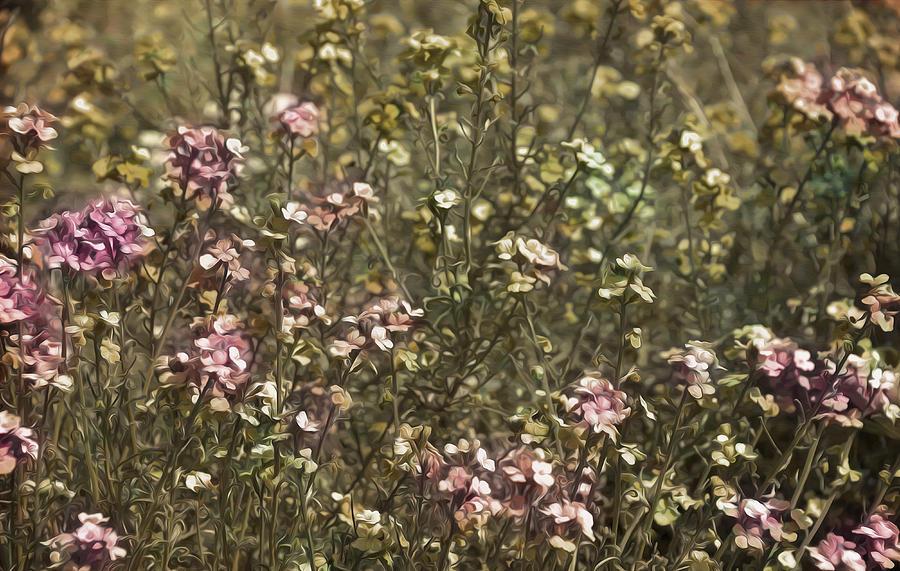 Anniversary Photograph - Flower Field by Svetlana Sewell