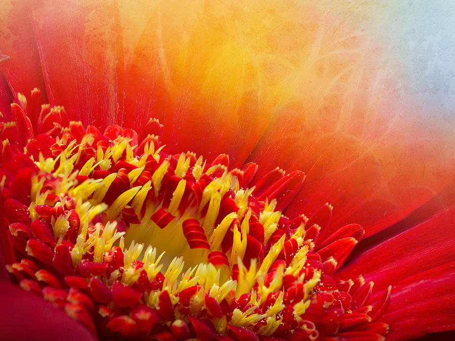 Flower Photograph - Flower Fragrance by Lutz Baar