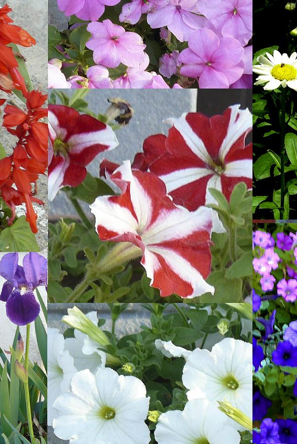 Flower Gardens Montage by Mary Ann Leitch