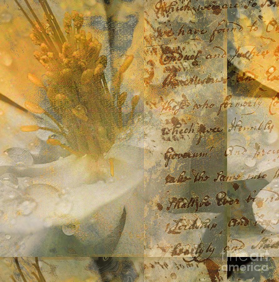 Mixed Media - Flower II by Yanni Theodorou