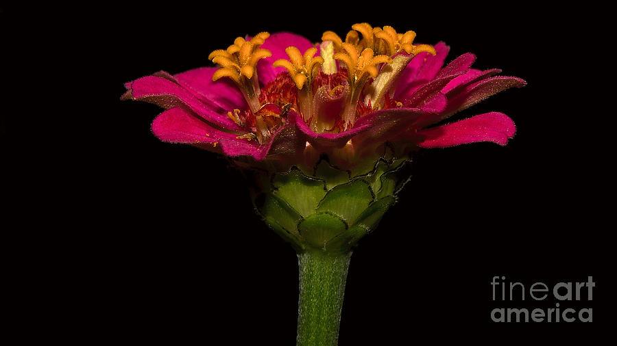 Flower in flower by Mareko Marciniak