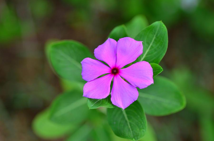 Flower Photograph - Flower In Garden by Artpixelgraphy Studio