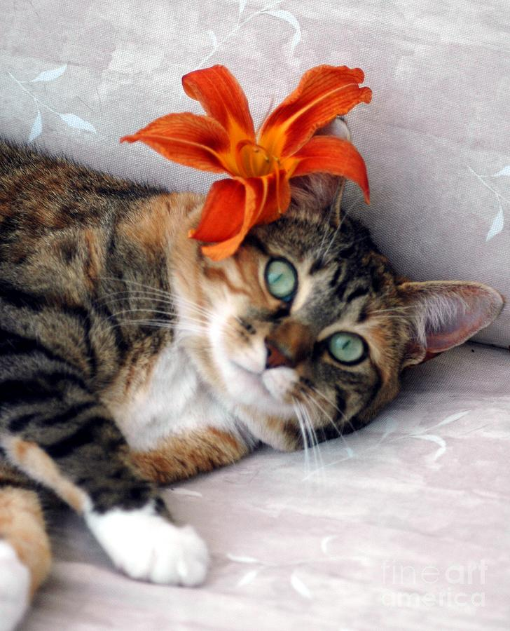Cat Photograph - Flower In My Hair by Kathleen Struckle