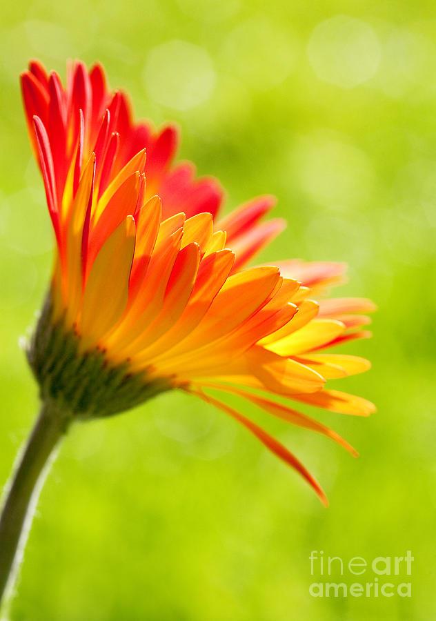 Flower Photograph - Flower In The Sunshine - Orange Green by Natalie Kinnear