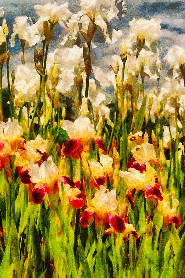 Iris Digital Art - Flower - Iris - Mildred Presby 1923 by Mike Savad
