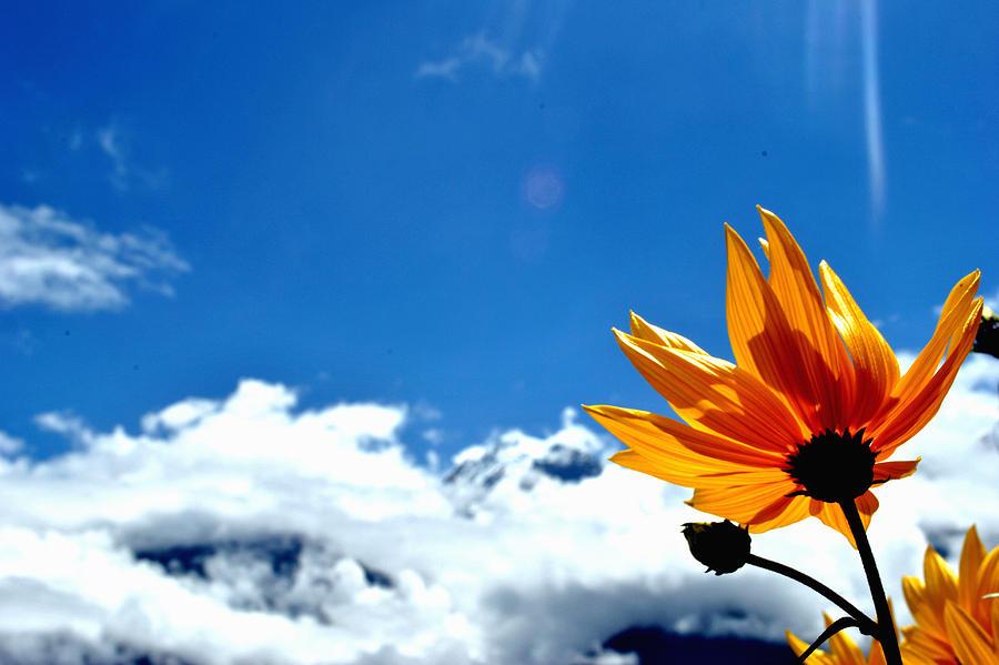 Blossom Photograph - Flower N Hills by Vijinder Singh