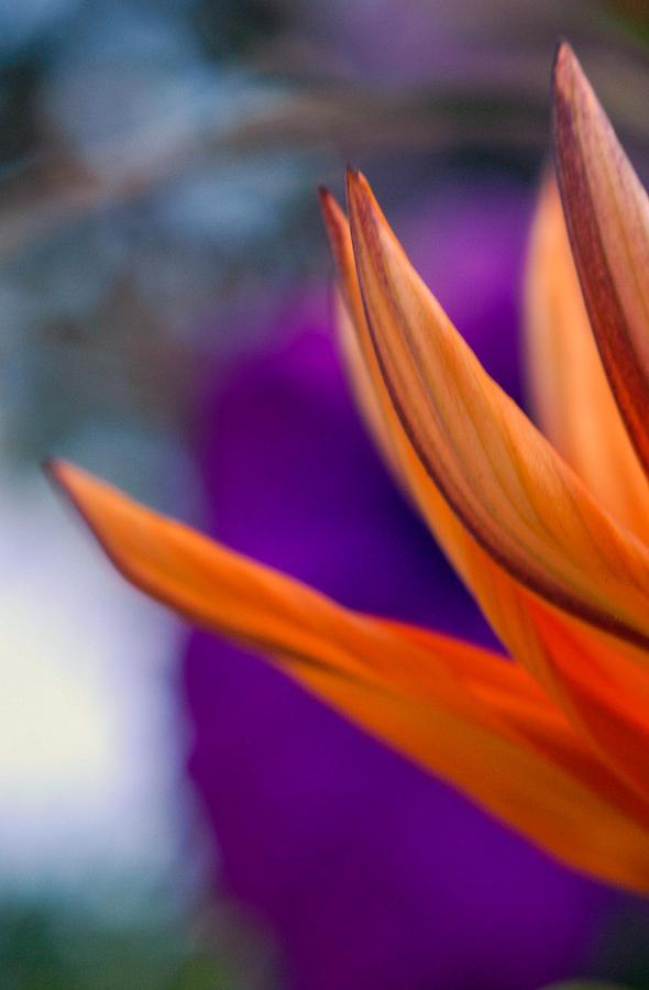 Flower Photograph - Flower On A Tabletop by Bill LITTELL