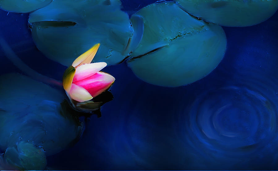 Lily Digital Art - Flower On The Lily by Cary Shapiro