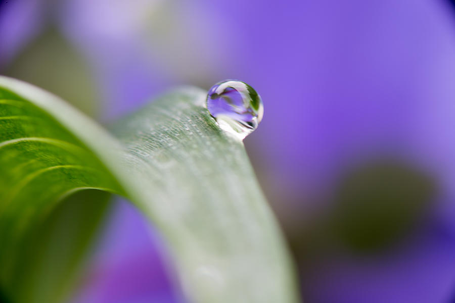 Flower Photograph - Flower Petal In A Raindrop by Paul Johnson
