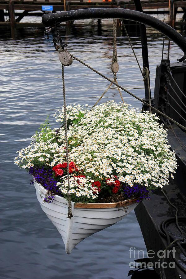 Flowers Photograph - Flower Pot by Sophie Vigneault