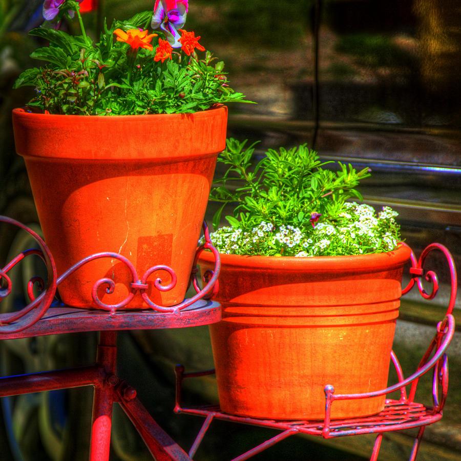 Flower Pots 6103 Photograph