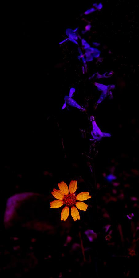 Flower Power by Atom Crawford