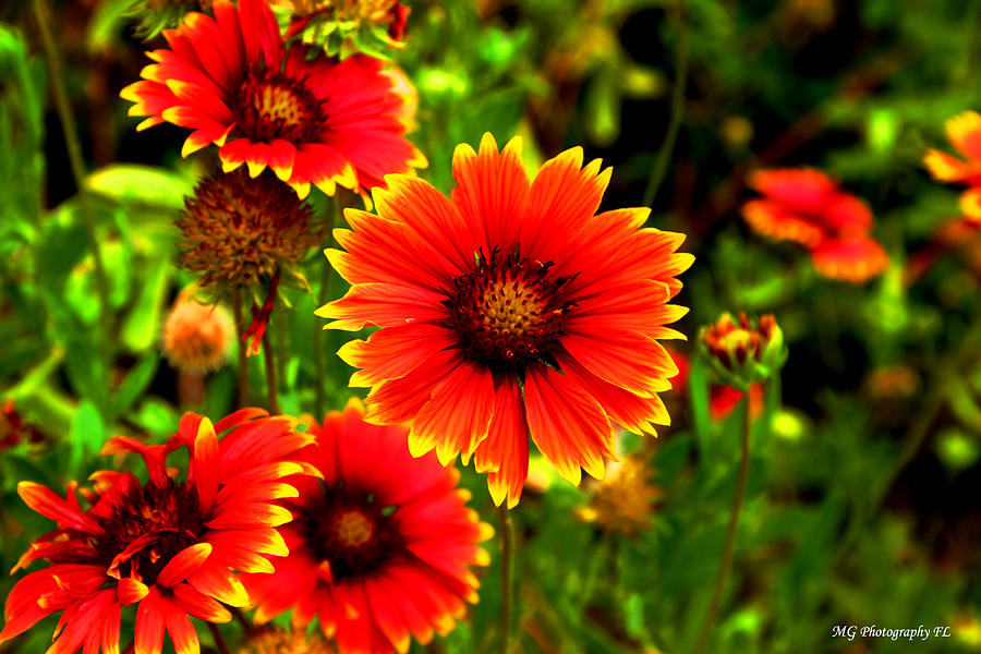 Orange Photograph - Flower Power by Marty Gayler