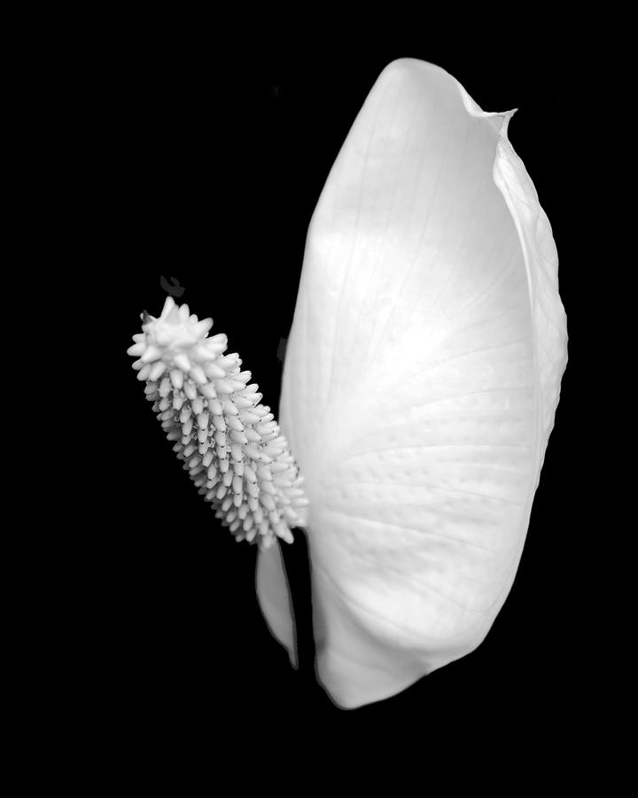 Flower Photograph - Flower Power Peace Lily by Tom Mc Nemar
