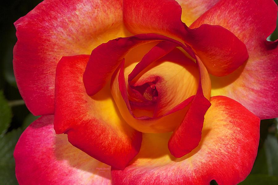 Rose Photograph - Flower Power by Phyllis Denton
