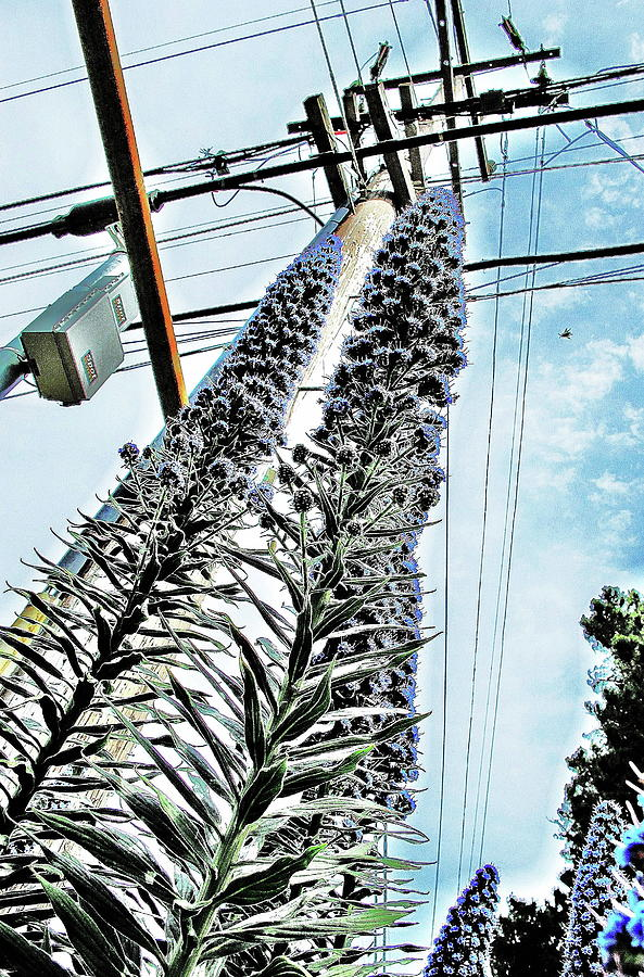 Flowers Photograph - Flower Power Pole In Brisbane  by John King