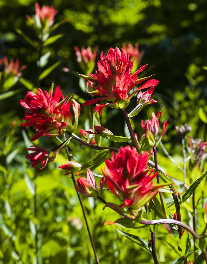 Wildflower Photograph - Flower by Scott Gould