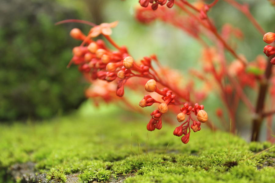 Flower Pyrography - Flower by Shuhaib Dew