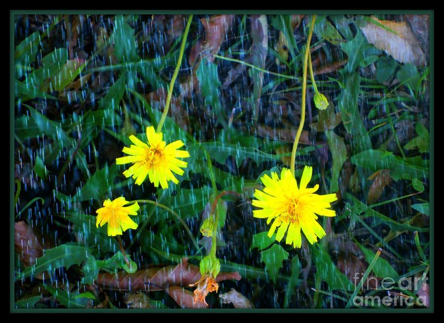 Flower Pyrography - Flower by Sky Skier