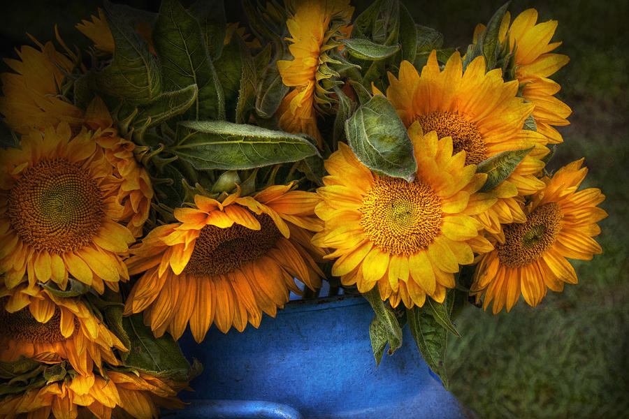 Sunflowers Photograph - Flower - Sunflower - The Suns Have Risen  by Mike Savad