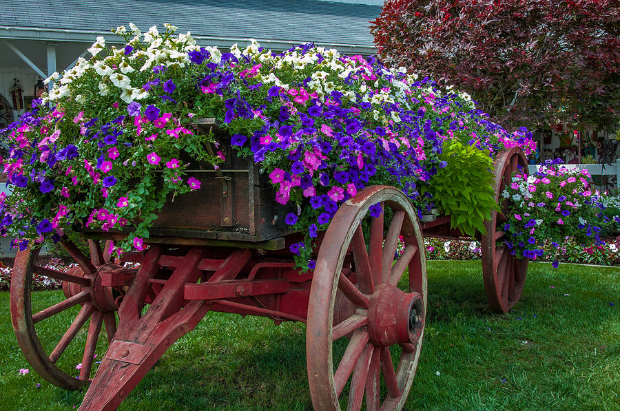 Wagon Photograph - Flower Wagon by Gene Sherrill