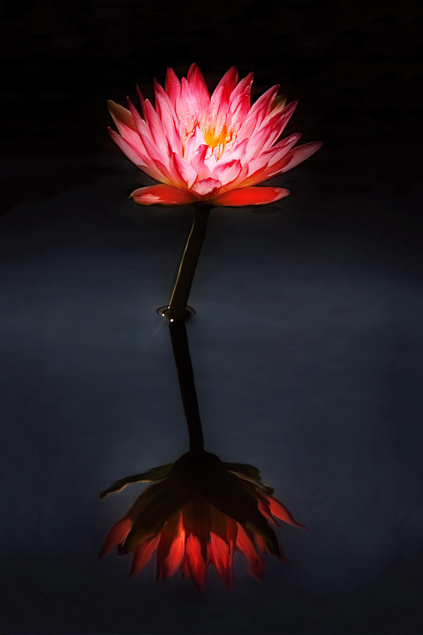 Pink Flower Photograph - Flower - Water Lily - Nymphaea Jack Wood - Reflection by Mike Savad