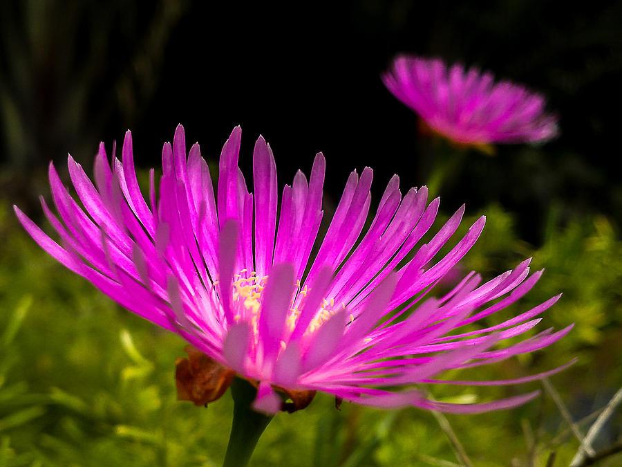 Flower Photograph - Flower1 by Fabio Giannini