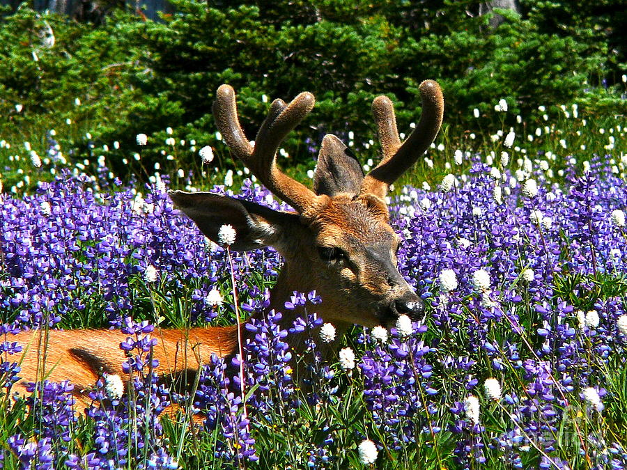 Buck Photograph - Flowerbed by Heike Ward