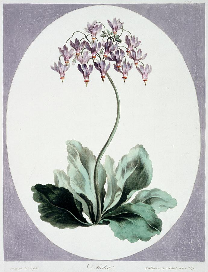 Artwork Photograph - Flowering Plant by Natural History Museum, London/science Photo Library
