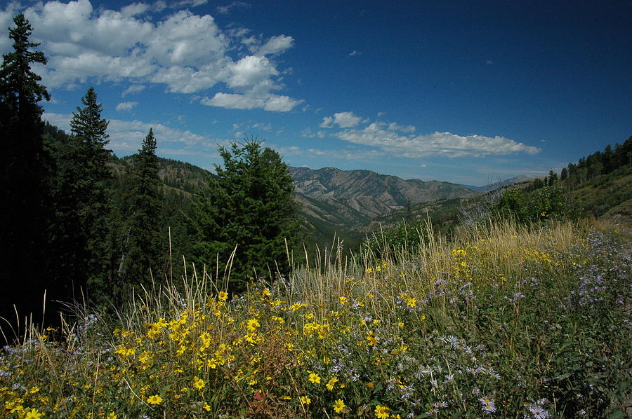 Wilderness Photograph - Flowering Yellowstone by Larry Moloney