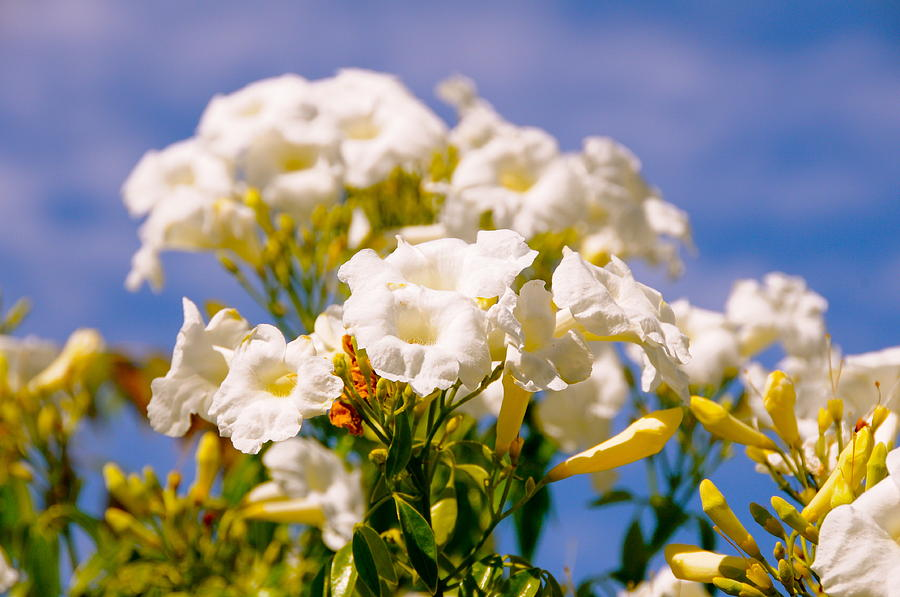 White Wedding Flowers Photograph - Flowers by Amanda Miles