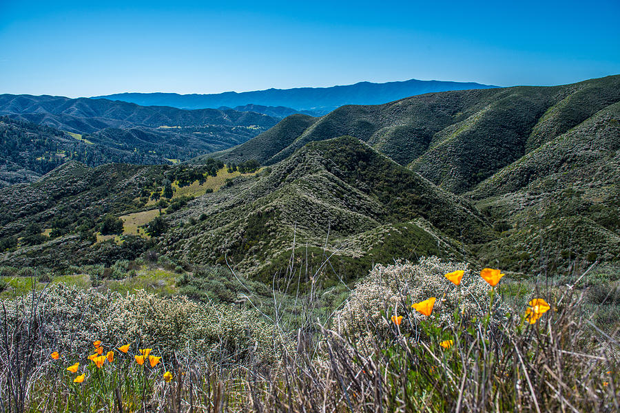 Mountains Photograph - Flowers and Mountains by Paul Johnson