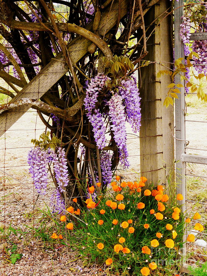 Gate Photograph - Flowers By The Gate by Avis  Noelle