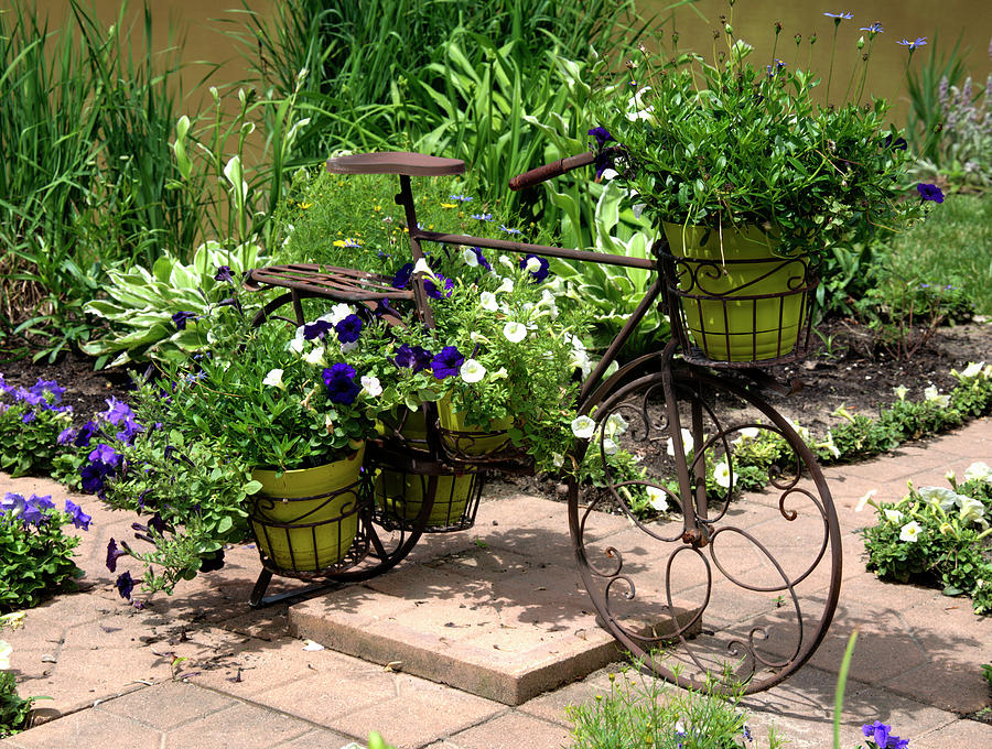 Bicycle Photograph - Flowers Home From The Market  by Paul Cannon