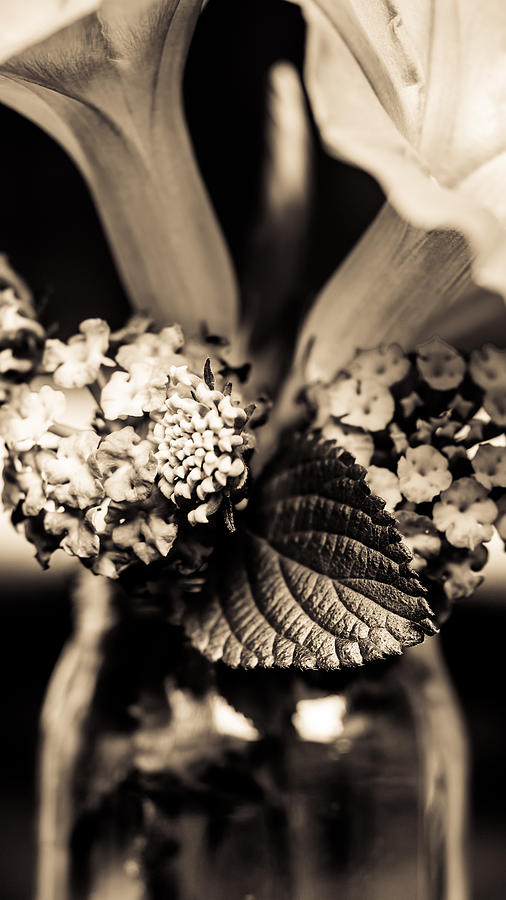 Flower Photograph - Flowers In A Jar by Marco Oliveira