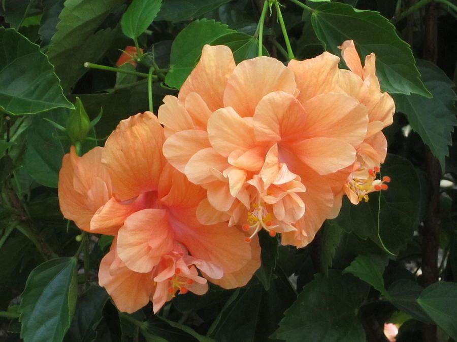 Peach Flowers Photograph - Flowers In Peach by Good Taste Art
