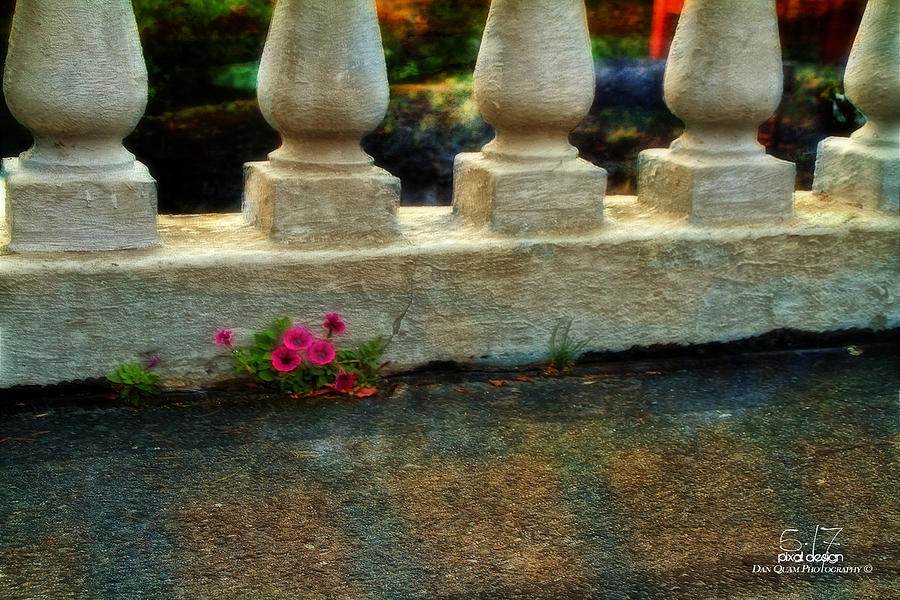 Hdr Photograph - Flowers In The Cracks by Dan Quam