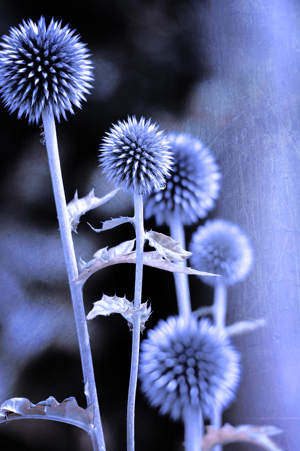 Background Photograph - Flowers In The Metal by Tommytechno Sweden