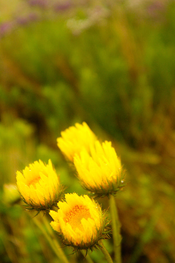 Africa Grass Photograph - Flowers In The Wild by Alistair Lyne