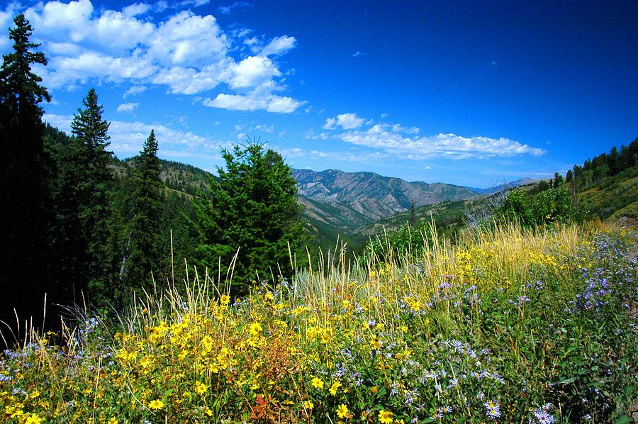 Wilderness Photograph - Flowers In Yellowstone by Larry Moloney