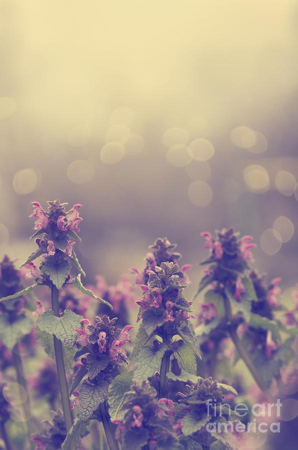 Deadnettle Pyrography - Flowers by Jelena Jovanovic