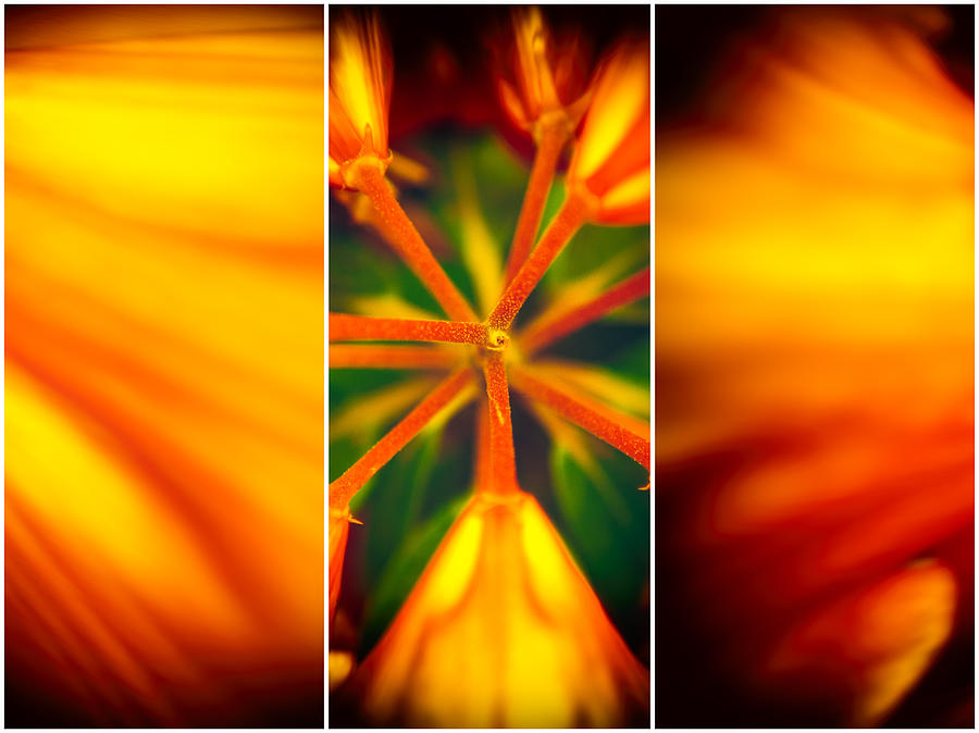 Flower Photograph - Flowers by Mihai Ilie